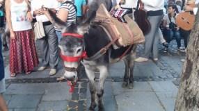 Romería de los Burros - San Benito Abad- La Laguna 2015 (7)