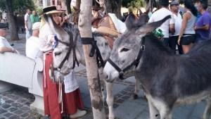 Romería de los Burros - San Benito Abad- La Laguna