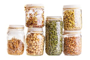 Stack of Different Sprouting Seeds Growing in a Glass Jar