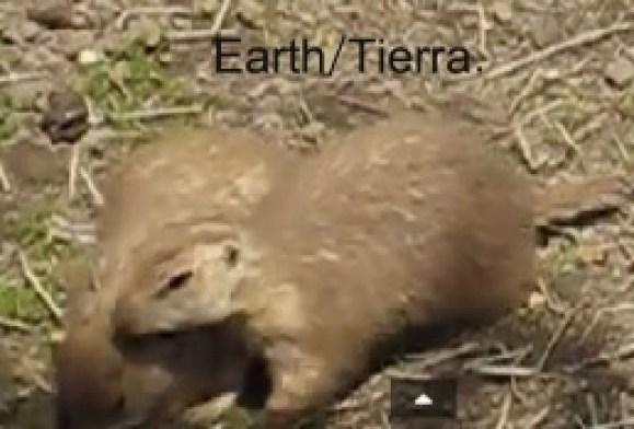 Este es un ratón de la Pradera de la Tierra. Podemos ver la semejanza con este animal terrestre y el obtenido en las imágenes de la NASA. ¿Real o Pareidolia?