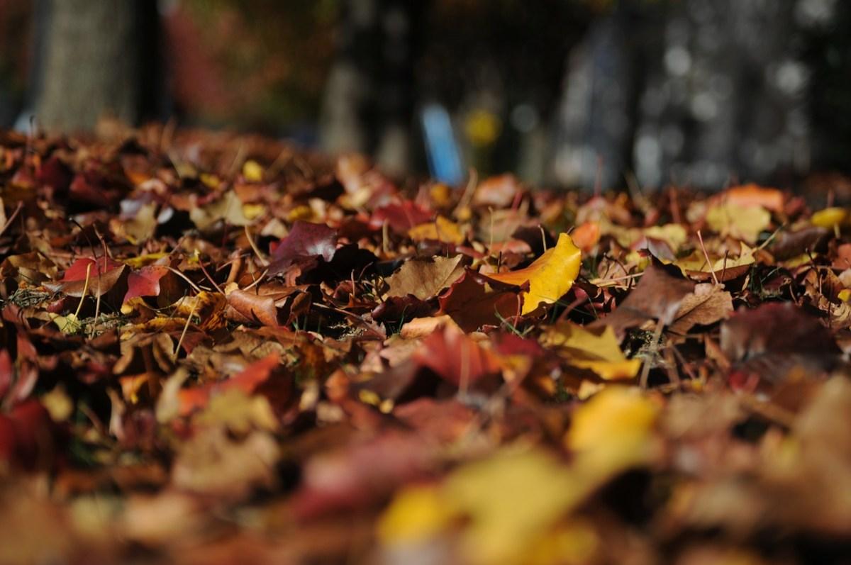 Las 5 canciones para ambientar tu otoño