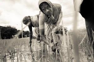 La crisi agraria in India, tra indifferenza e disperazione