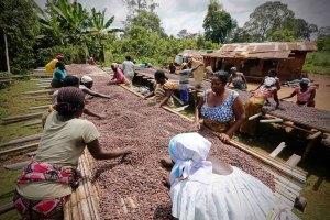 Dalla terra al mercato: il commercio del cacao in Costa d'Avorio