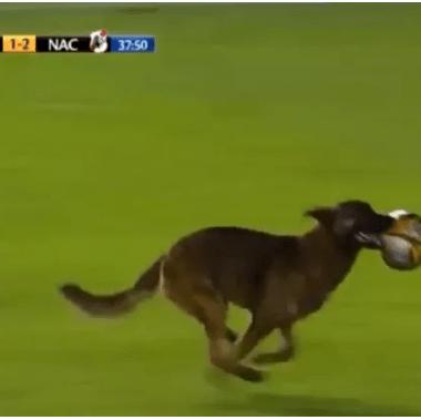 Perro Futbol Bolivia Policía Primera División Blooming Real Potosí