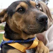 Perro, Medio Maratón, Australia, Stormy