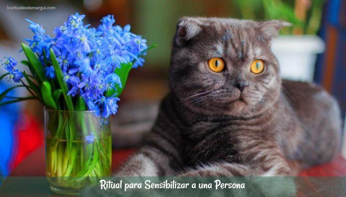 ritual-sensibilizar-persona