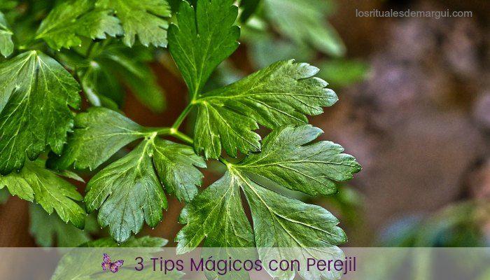 3 Tips Mágicos con Perejil