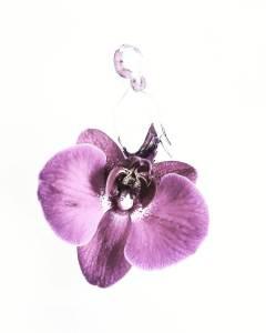 Orchidee creatieve bloementip