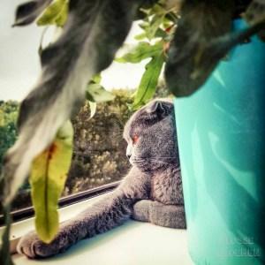 lossebloemen welke planten en bloemen geschikt voor een kat
