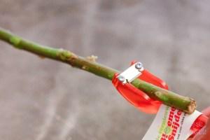 Schuin snijden van losse bloemen; snoeischaar, schaar, mesje of bloemensnijder