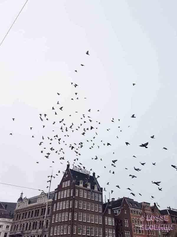 Amsterdam - De Dam met duiven losse bloemen inspiratie