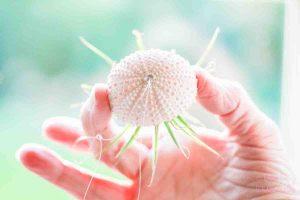 airplant kwal zomer DIY doe het zelf project