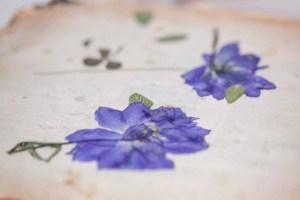 bloemen drogen lossebloemen.nl