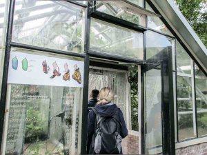 hortus Amsterdam botanische tuin hotspot