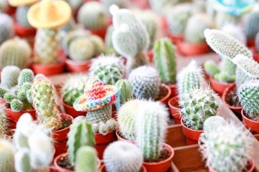 swanmarket van nelle fabriek Rotterdam betonandmore lossebloemen.nl cactussen