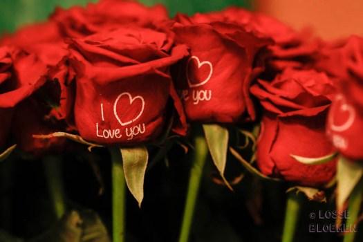 I love you red rose Fransenroses losse bloemen Trade fair Royal FloraHolland lossebloemen flowers