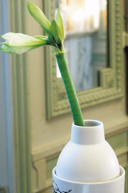 Amaryllis-op-de-vaas-losse-bloem-beeld-mooiwatbloemendoen.nl