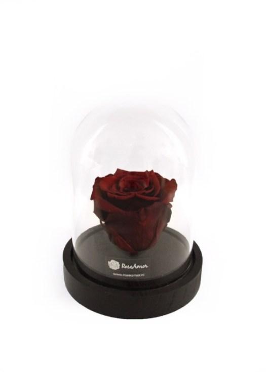 RoseAmor-mini-stolp-zwart_losse roos lang houdbare roos losse bloemen