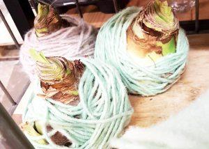 amaryllis-bolletje-wol-breien-losse-bloemen-planten-bol-versieren-huis-decoratie-