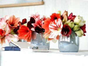 amaryllissen-mooiwatbloemendoen-losse-bloemen-in-vaasjes