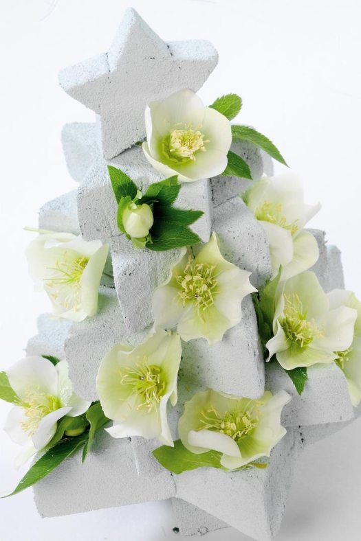 helleboris-kerstroos-plant-mooiwatplantendoen-kerstboom-bloemenblog