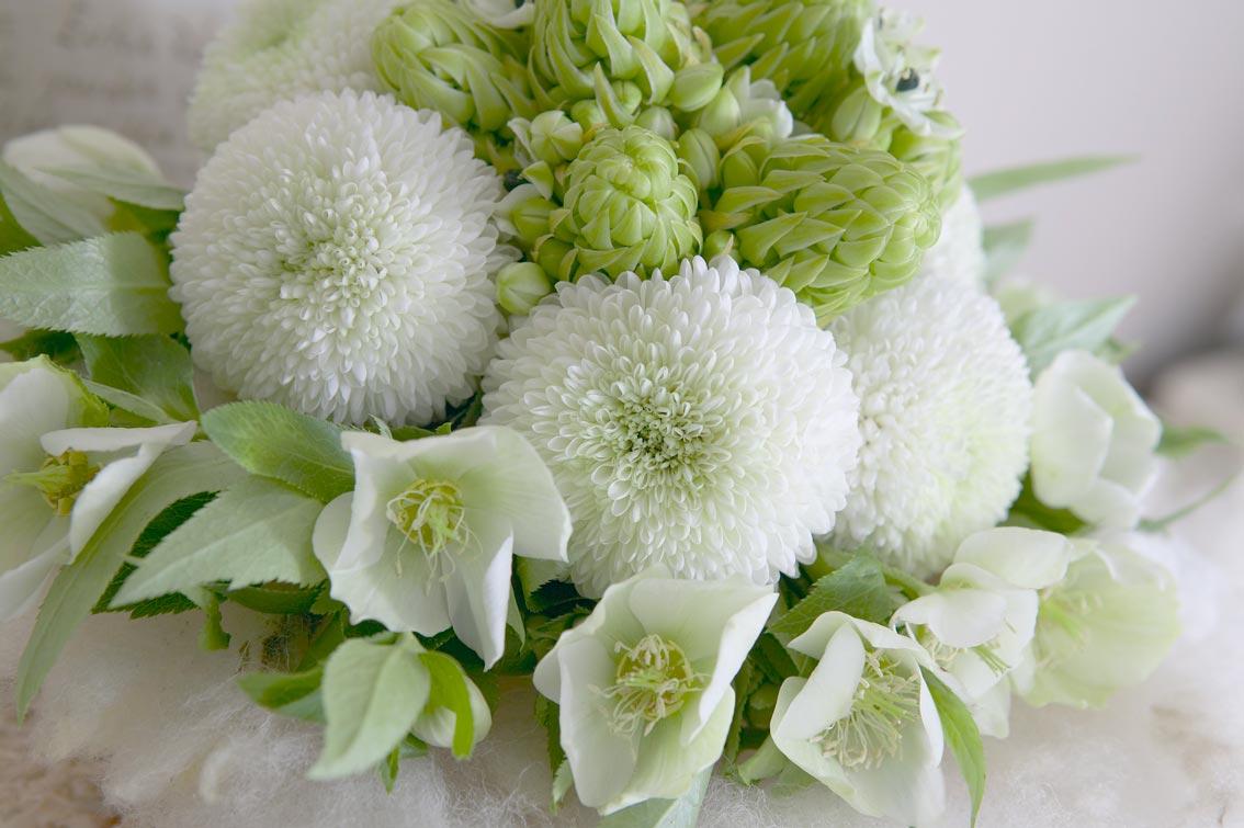 kerstroos-helleborus--mooiwatbloemendoen-beeld-bloemenblog-losse-bloemen-helleboris-zuidenwindlelie-chrysant