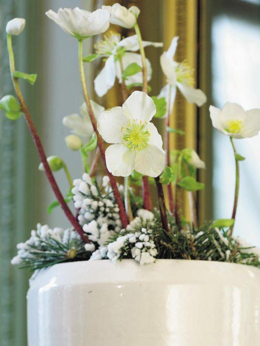 kerstroos-helleboriu-mooiwatplantendoen-kerst-arrangement-losse-bloemen-blog