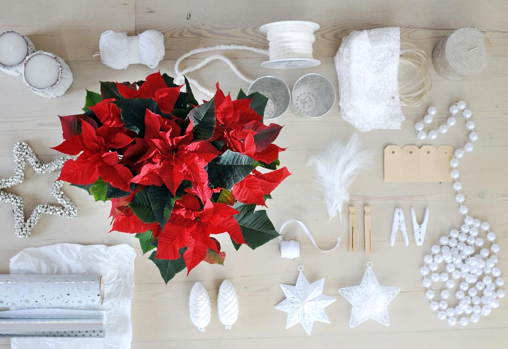 kerstster-wit-met-rood-kerstkleuren-waarom--losse-bloemen-mooiwatbloemendoen.nl-beeld