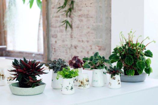 peperomia-slaapkamer-beeld--mooiwatplantendoen.nl-planten-in-de-slaapkamer-welke-kunnen-