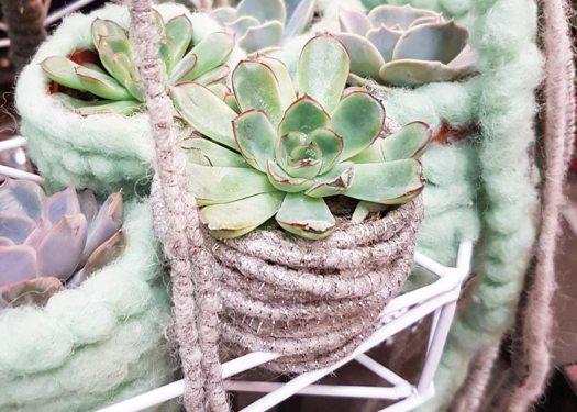planten-losse-bloemen-blog-waterdrinker-inspiratie-breien