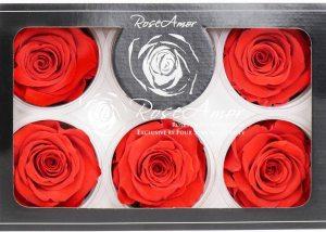 rose-amor-roses-that-last-forever-by-four-seasons-quality-preserved-roses--langhoudbare-rozen-losse-bloemen