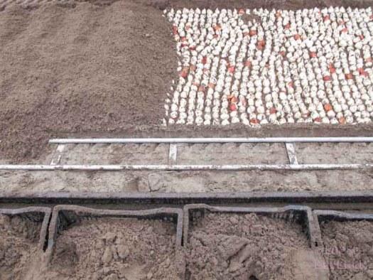 tulpen grond bearflowers losse bloemen lossebloemen.nl tulpen veld Dutch tulips tulipa tulpenbollen hoe