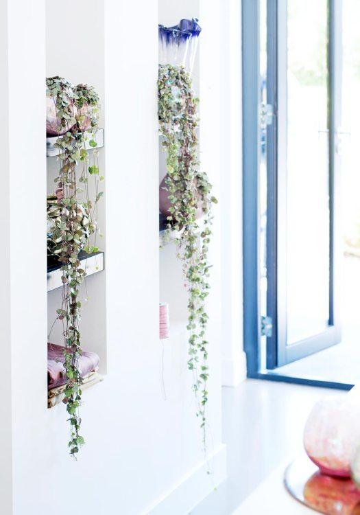 witwonen lantaarnplantje-mooiwatplantendoen-planten-blog