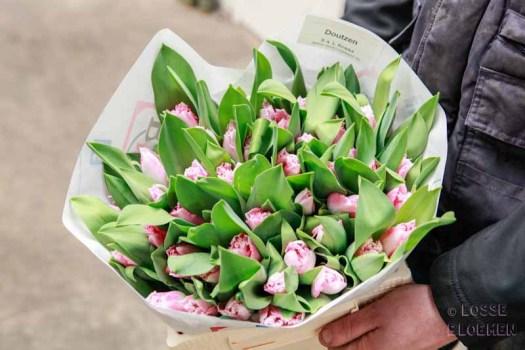 Tulp doutzen Martin Braas lossebloemen blog tulpen kweken tulpen broeien watertulpen binnenkijker in de kas