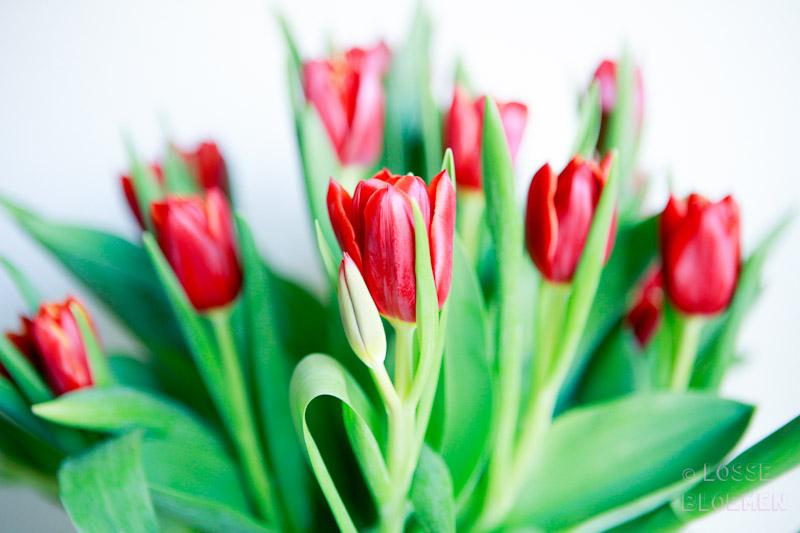 lossebloemen.nl bulb bouquet flowers tulpen uit Amsterdam bloemenblog losse bloemen tulpen met bol eraan frederiqueschoice.com