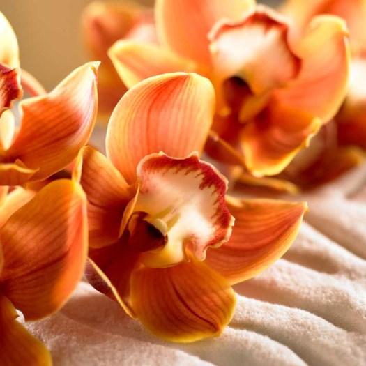 Oranje koningsdagbloemen foto- mooiwatbloemendoen.nl op losse bloemen blog Cymbidium Orchidee