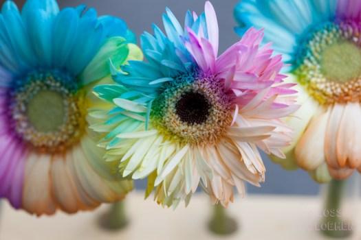 gekleurde bloemen houtjetouwtje blog happycolorsbv bloemenfoto's Chelan Bakker - Lossebloemen.nl bloemenblog