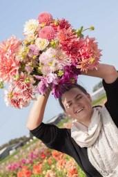 Famflowerfarm dahlia velden - foto's - lossebloemen-118