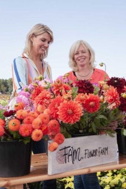 Famflowerfarm dahlia velden - foto's - lossebloemen-158