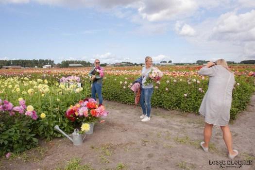 Fam flower farm dahlia velden - foto's - lossebloemen