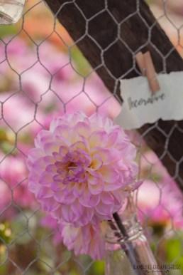 Famflowerfarm dahlia velden - foto's - lossebloemen