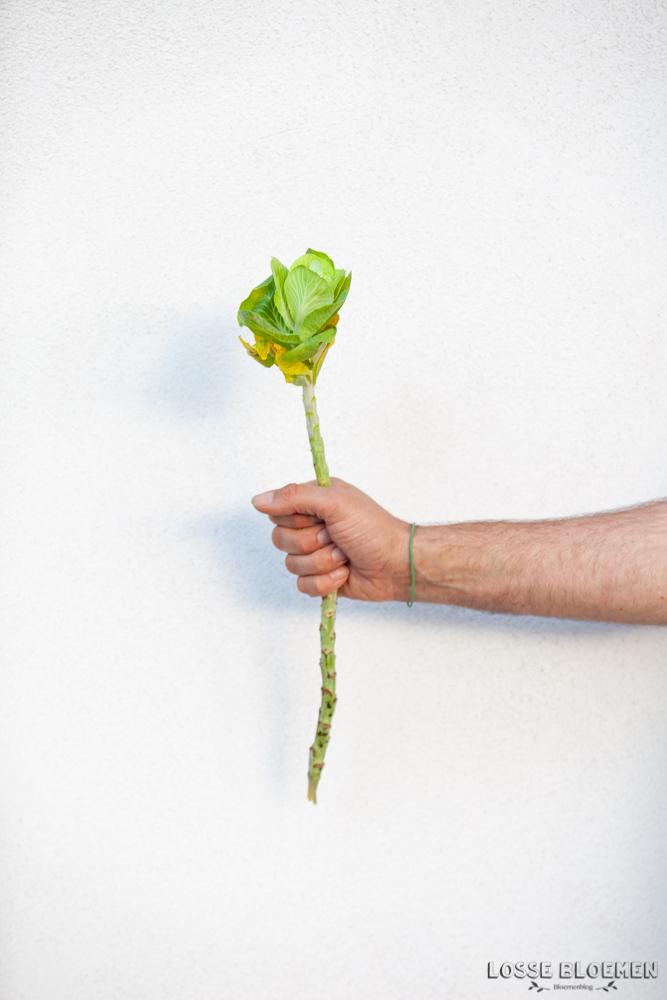 Brassica Kleurrijke verhalen bloemenveiling Plantion Ede