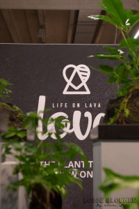 Love plant - life on lava plants van kwekerij zeurniet Lossebloemen trade fair Royalfloaholland Aalsmeer 9 nov 2018 - bloemenblog lossebloemen.nl