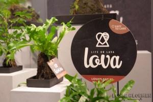 Lova Plant - kwekerij zeurniet Lossebloemen trade fair Royalfloaholland Aalsmeer 9 nov 2018 - bloemenblog lossebloemen.nl