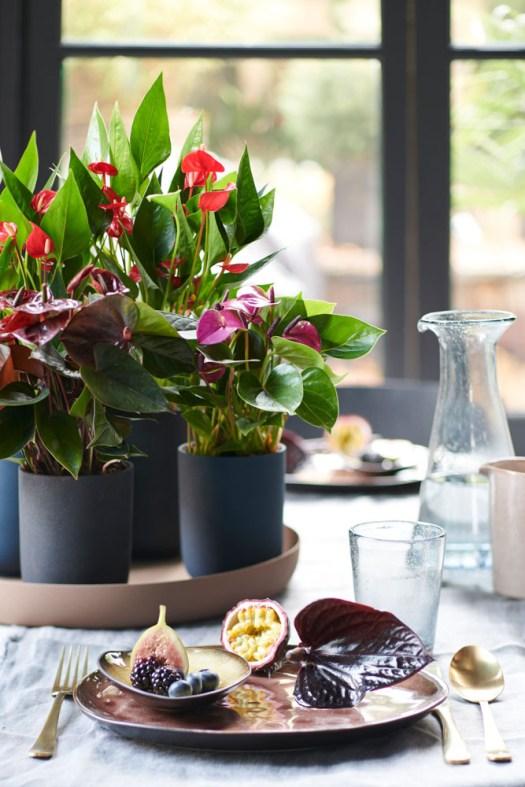 Anthurium flamingobloem kleurrijk snijbloem close up beeld: mooiwatplantendoen.nl