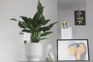 Ogreen planten online plantenwinkel