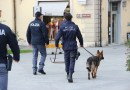 A Pisa anche la Polizia Municipale effettua i sequestri di droga