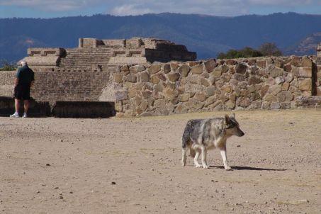 El Lobo! ;-)