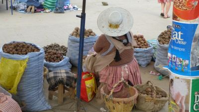 bolivian selling potatoes at the market