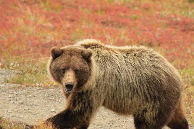 bear-4486947_640